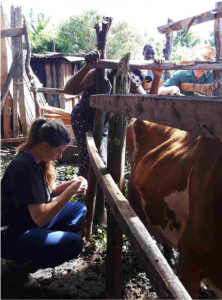 Julia doing a California Mastitis Test on a cow