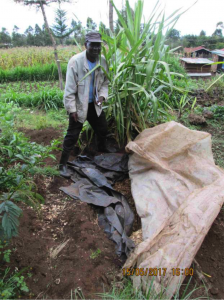 A silage pit with Stephen Mutua on his farm